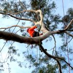 Complex-Tree-Climbing