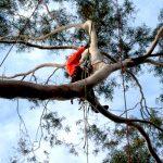 Complex-Tree-Climbing2