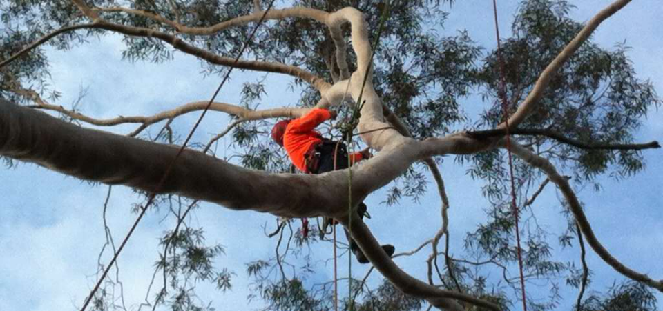 Bradsworth Tree Services & Contracting - Tree Removal Service