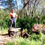large-stump